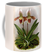 Orchid, C. Ashburtonioe Superbum, 1891 Coffee Mug