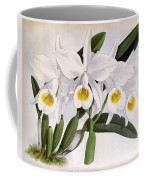 Orchid, C. Eldorado Virginalis, 1891 Coffee Mug