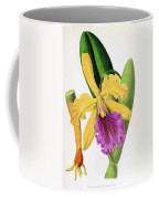 Orchid, Cattleya Dowiana, 1880 Coffee Mug