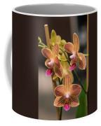 Orchid Chingruey's Goldstaff Coffee Mug