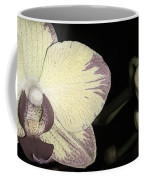 Orchid In Bloom Coffee Mug