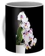 Orchid Phalaenopsis White Flower Coffee Mug