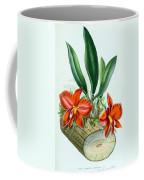 Orchid, Sophronitis Grandiflora, 1880 Coffee Mug