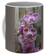 Orchid With Purple Patches Coffee Mug