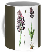 Orchis Militaris, The Military Orchid Coffee Mug