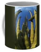 Organ Pipe Cactus Arizona Coffee Mug