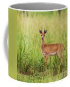 Oribi Ourebia Ourebi Coffee Mug