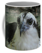 Osprey Portrait Coffee Mug