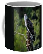 Osprey Gaze Coffee Mug