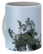Osprey Reinforcing Its Nest 2017 Coffee Mug