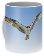 Osprey Soar Search Coffee Mug