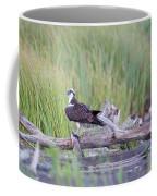 Osprey Victory Coffee Mug