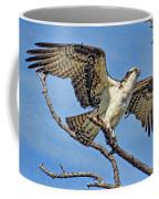 Osprey Wing Stretch Coffee Mug