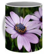Osteospermum 'margarita Lilac' Coffee Mug