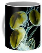 Ostracods, Lm Coffee Mug