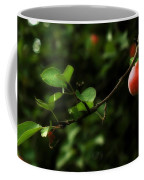 Out On A Limb  A Tempting Photograph Of A Tasty Ripe Red Apple On A Tree  Coffee Mug