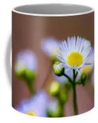 Oxeye Daisy - Paint Coffee Mug