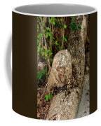 Oxtankah Coffee Mug