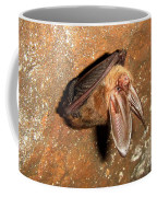 Ozark Big-ear Bat Coffee Mug