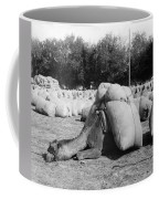 Pack Camel, C1910 Coffee Mug