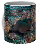 Pair Of Giant Moray Eels In Hole Coffee Mug