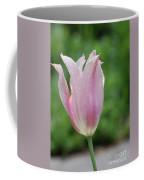 Pale Pink Tulip With Dew Drops Flowering Coffee Mug