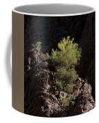 Palo Verde Spotlight-sq Coffee Mug