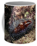 Panamic Deer Cowrie, Cypraea Cervinetta Coffee Mug