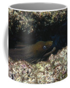 Panamic Green Eel Hides In Reef Coffee Mug by James Forte