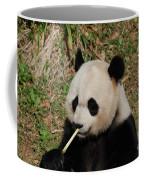 Panda Bear Eating Bamboo Shoots Up Close And Personal Coffee Mug