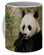 Panda Bear Holding On To Bamboo While Eating  Coffee Mug