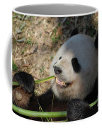 Panda Bear Showing His Teeth As He Munches On Bamboo Coffee Mug