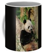 Panda Bear With Teeth Showing While He Was Eating Bamboo Coffee Mug