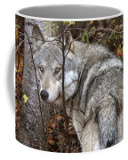 Panoramic Gray Wolf Yukon Coffee Mug