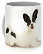 Papillon X Jack Russell Terrier Dog Coffee Mug