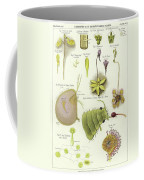 Parasites And Insectivorous Plants Coffee Mug