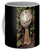 Parasol Mushroom           Macrolepiota Procera           August     Indiana   Coffee Mug