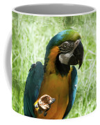 Parrot Eating Nut Coffee Mug