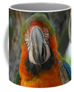 Parroting Information Coffee Mug