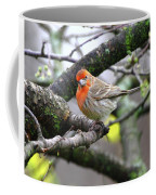 Partial-migrator House Finch Coffee Mug