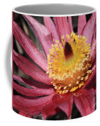 Pasque Flower Macro Coffee Mug