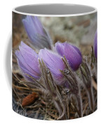 Pasque Flower Watercolor Coffee Mug