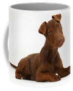 Patterdale Terrier Puppy Coffee Mug
