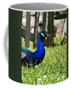 Peafowl Eye To Eye Coffee Mug