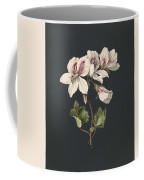 Pelargonium Album Bicolor, M De Gijselaar 1830 Coffee Mug