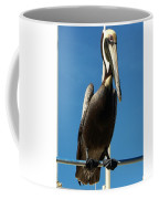 Pelican Dreams Coffee Mug