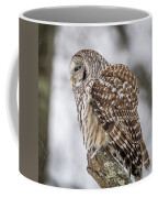 Perched Barred Owl Coffee Mug