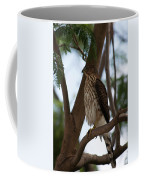 Perched Hawk Coffee Mug