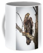 Perched Juvenile Eagle Coffee Mug