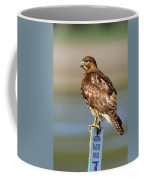 Perched Red Tail Hawk Coffee Mug
